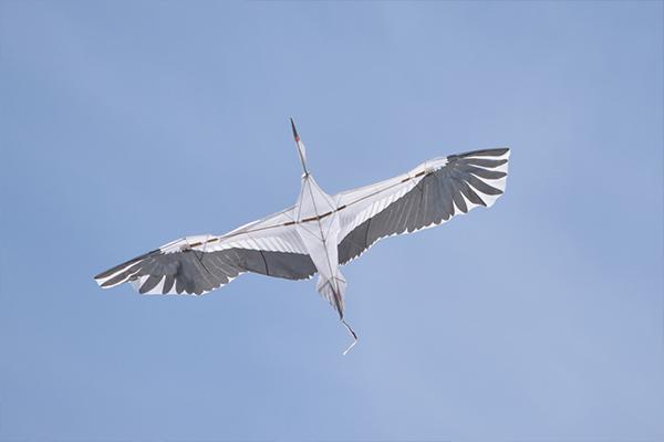 ガーデンプラザではバイオカイトの飛行実演を披露。流体力学を活かしたカイト(凧)はわずかな風でも空高く舞い上がります。
