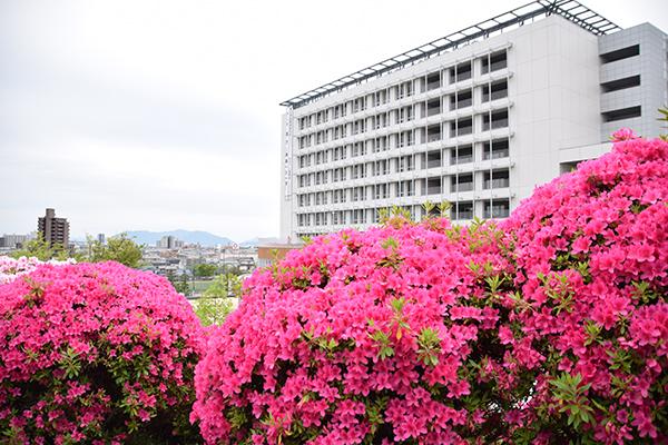 キャンパス内のツツジは、平成最後のイベントを締めくくるにふさわしく、見事に咲き誇っていました。