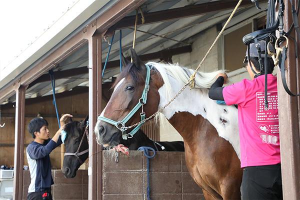 活動はブラッシングなど馬の手入れからスタート。健康状態の確認や馬とコミュニケーションを取る大切な時間。