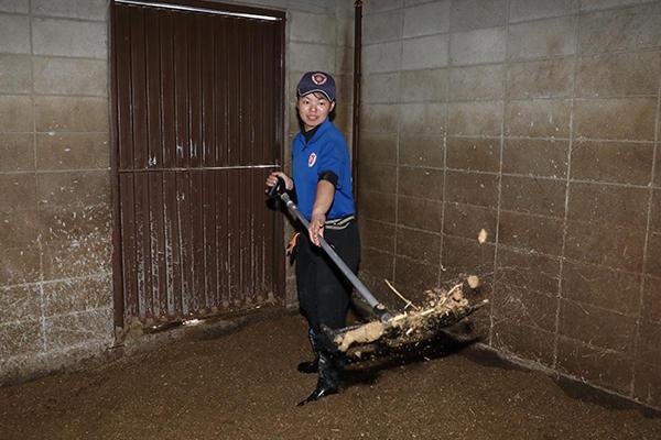 馬房(馬の寝床)の掃除も部員の仕事。チップフォークでおがくずと糞を選別しながらキレイにしていきます。