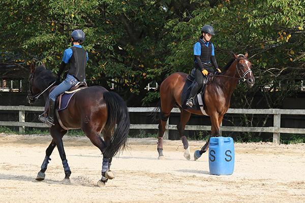 ウォーミングアップに、馬場をゆっくり回ることからスタート。この時にその日の馬の状態を見極めて乗り方を工夫するのだとか。